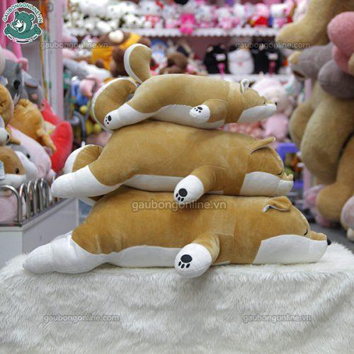 Chó Akita Vàng