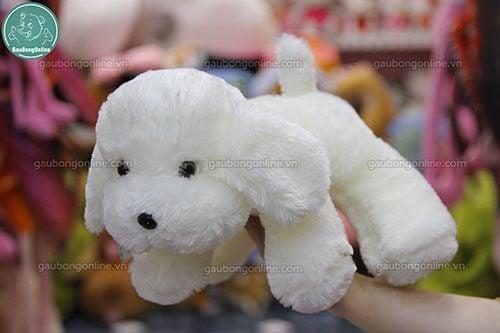 chó bông trắng