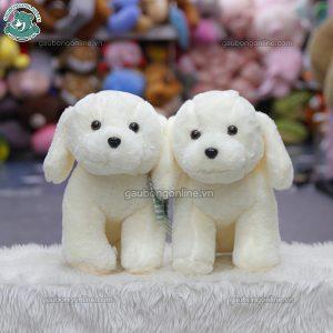 Chó Trắng Bông Ngồi