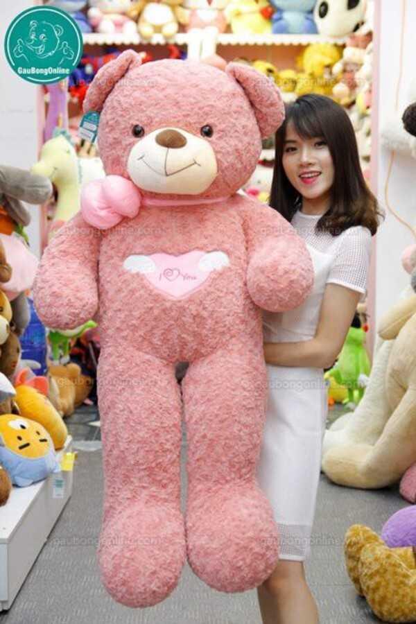 Gấu teddy angle hồng