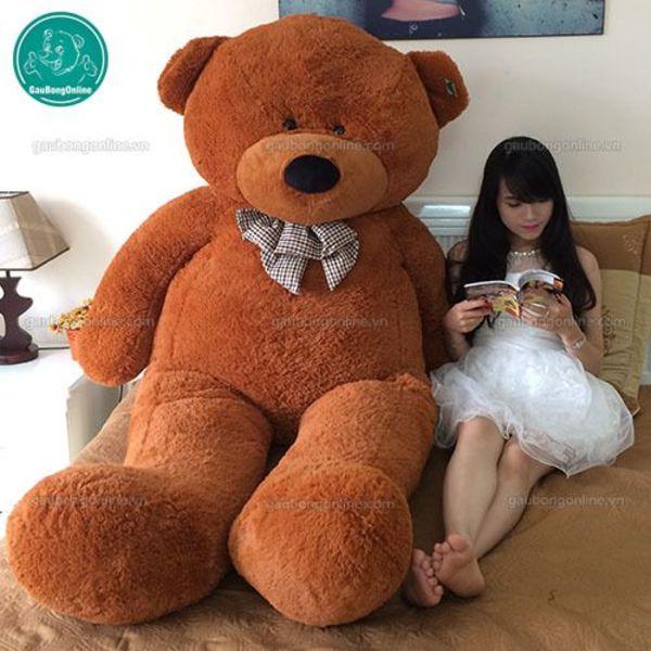 Gấu teddy nâu đại