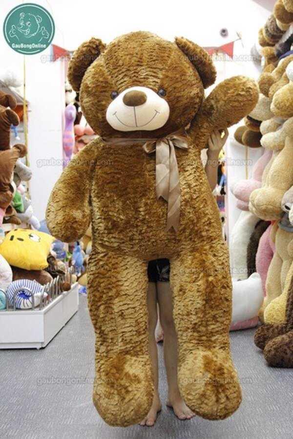 gấu bông teddy 1m5 nâu
