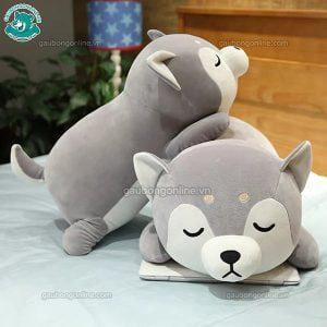 Chó Bông Shiba Nằm Ngủ