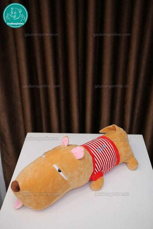 Chó Puco Bông